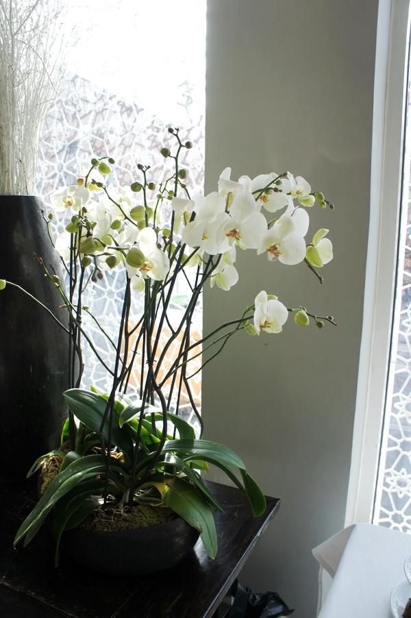 hvide orkider