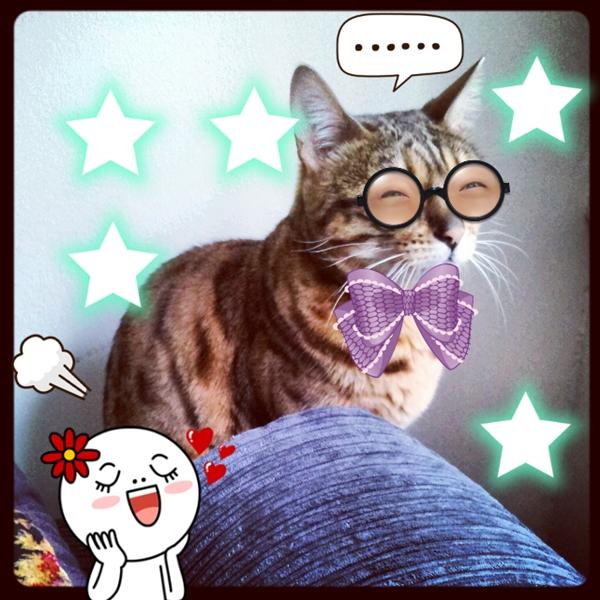 cat, bengal cat
