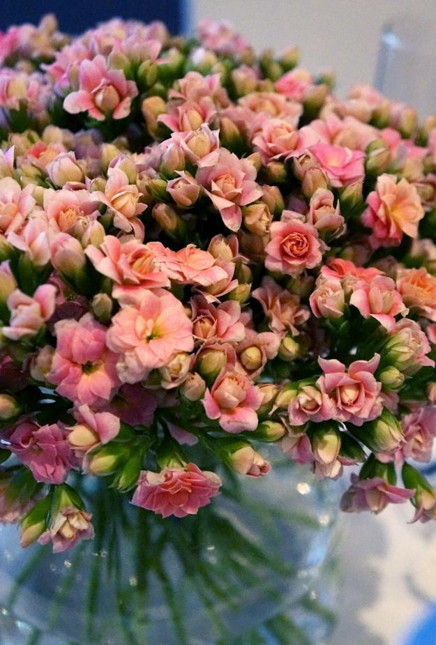 blomster, flowers