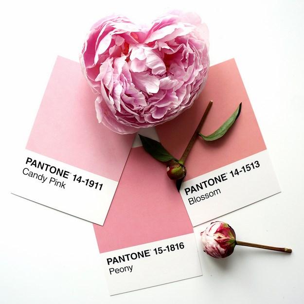 Pæon, Pæoner, peonies, peony flower, pantone, pantone kort, pantone colours,
