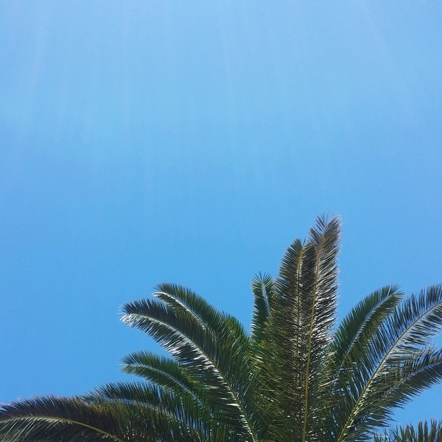 palmer, palms, blue skies